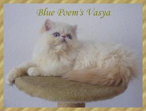 vasya14sem